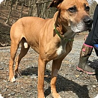 Adopt A Pet :: Kano - Pottsville, PA