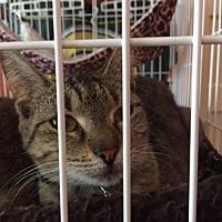 Adopt A Pet :: Terra - Columbia, SC
