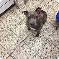 Adopt A Pet :: Serafina - Avon, OH