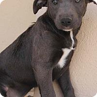Adopt A Pet :: Kisska - Yuba City, CA