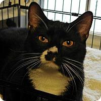 Adopt A Pet :: Axel - Winston-Salem, NC