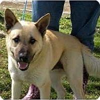 Adopt A Pet :: Dakota - Seattle, WA