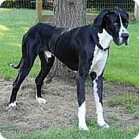 Adopt A Pet :: Odin - Pearl River, NY