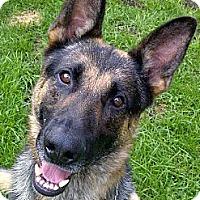 Adopt A Pet :: Rex - Rigaud, QC