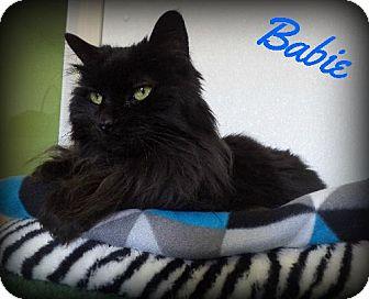 Domestic Longhair Cat for adoption in Pekin, Illinois - Babie