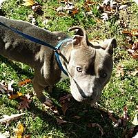 Adopt A Pet :: Ruben - Rockaway, NJ