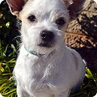 Adopt A Pet :: Berry-Adoption pending - Bridgeton, MO