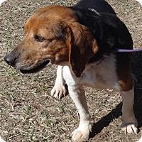 Adopt A Pet :: Skipper - Freeport, ME