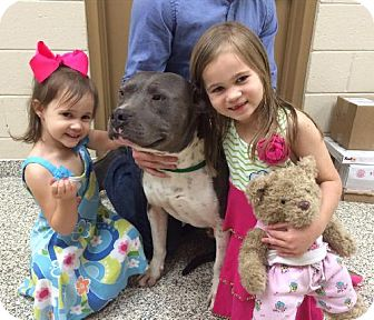 American Bulldog/American Staffordshire Terrier Mix Dog for adoption in Decatur, Georgia - Zeus *Sensitive People-Dog*