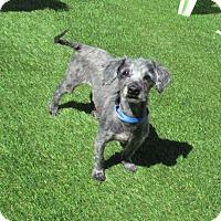 Adopt A Pet :: Clyde - House Springs, MO