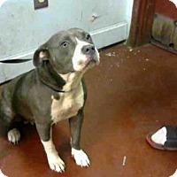 Adopt A Pet :: VONNIE - Atlanta, GA