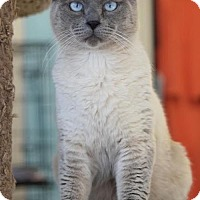 Adopt A Pet :: Mr Blue - DFW Metroplex, TX