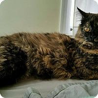 Adopt A Pet :: Mia - Homewood, AL