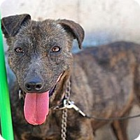 Shepherd (Unknown Type) Mix Dog for adoption in San Diego, California - Helen