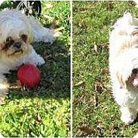 Adopt A Pet :: Lucie-VA - Mays Landing, NJ