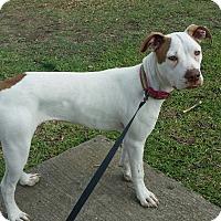 Adopt A Pet :: Piper - DFW, TX