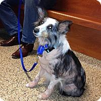 Adopt A Pet :: Cheyenne - San Diego, CA