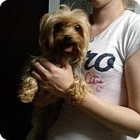 Adopt A Pet :: Remmington - Lorain, OH