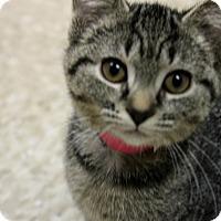 Adopt A Pet :: Cedella - Medina, OH