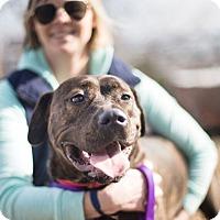 Adopt A Pet :: Mari - Reisterstown, MD
