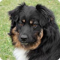 Adopt A Pet :: Buddy - Westfield, NY