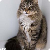 Adopt A Pet :: Ellery - Merrifield, VA