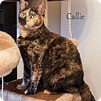 Adopt A Pet :: Callie - Dallas, TX