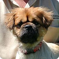 Adopt A Pet :: Buster - white settlment, TX
