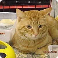 Adopt A Pet :: Milo - Riverside, RI