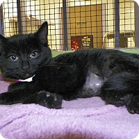 Adopt A Pet :: Harlow - Dover, OH