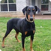 Adopt A Pet :: Fonz - Fort Worth, TX