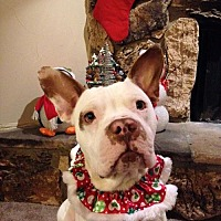 Adopt A Pet :: Finnigan - Courtesy Post - Dallas, GA