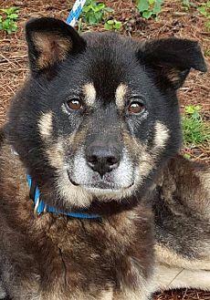 Husky/Shepherd (Unknown Type) Mix Dog for adoption in Decatur, Georgia - Kensington *SEEKING DOG SAVVY TYPES*