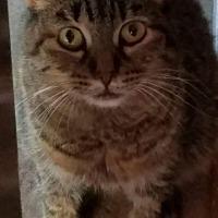 Adopt A Pet :: FRESCA - Modesto, CA