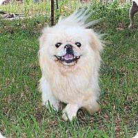 Adopt A Pet :: Pete - Allentown, PA