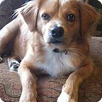 Adopt A Pet :: Sooner - Santa Monica, CA