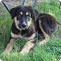 Adopt A Pet :: *Bernie - PENDING - Westport, CT