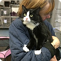 Adopt A Pet :: Fanta- Dog like! - Arlington, VA