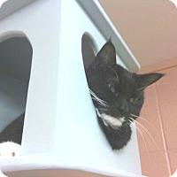 Adopt A Pet :: Annabelle - Lake Charles, LA