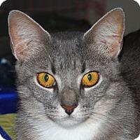 Adopt A Pet :: Kanga - North Branford, CT