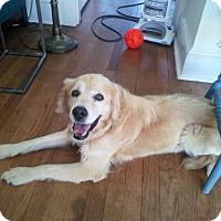 Adopt A Pet :: Canyon Jack - New Canaan, CT