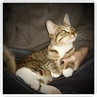 Adopt A Pet :: WESTON - Medford, WI