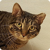Adopt A Pet :: Cuthbert - Grayslake, IL