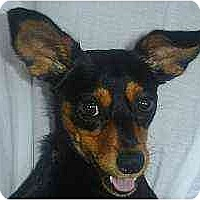 Adopt A Pet :: Tasha - Nashville, TN