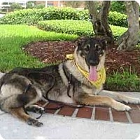 Adopt A Pet :: Stella - Green Cove Springs, FL