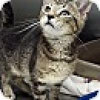 Adopt A Pet :: Hugh Jackman - Richboro, PA