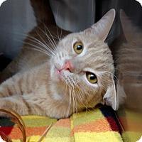 Adopt A Pet :: Tapitio - Newport Beach, CA