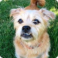 Adopt A Pet :: Mr. Willi - San Francisco, CA