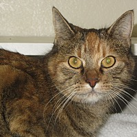 Adopt A Pet :: Shellie - Ridgway, CO