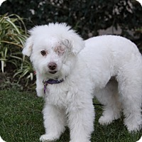 Adopt A Pet :: MELANIE - Newport Beach, CA